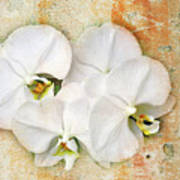 Orchids Upon The Rough Art Print