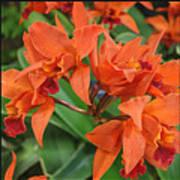 Orchids Vertical Triptych Art Print