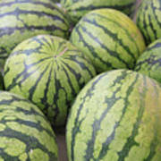 Organic Watermelon Print by Wendy Connett