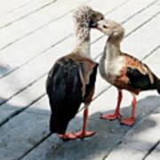 Orinoco Geese Touching Heads On A Boardwalk Art Print