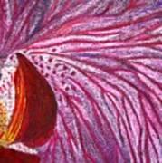 Orquidea Rosa Art Print