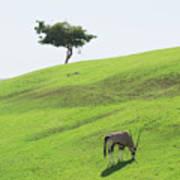 Oryx On Hill Art Print