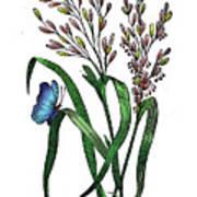 Oryza Sativa Art Print