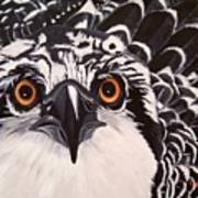 Osprey Eyes  Art Print