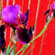 Other Side Of The Fence Art Print