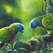 Out On A Limb - St. Lucia Parrots Art Print