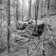 Outcrop, Woods, Dipton Burn Art Print