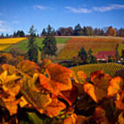 Over The Durant Vineyards Art Print