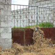 Overgrown Rusted Gate Art Print