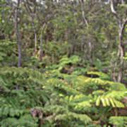 Overlooking The Rainforest Art Print