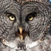 Owl 6 Art Print
