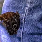 Owl Butterfly On Jeans Art Print
