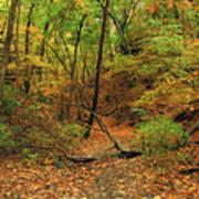Owl Canyon In Autumn 2 Art Print