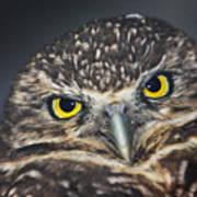 Owl Face To Face Art Print