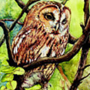 Owl From Butterfingers And Secrets Art Print by Morgan Fitzsimons