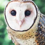 Owl Insight Art Print