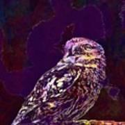 Owl Little Owl Bird Animal  Art Print