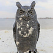 Owl On The Beach Art Print