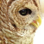 Owl Profile Art Print