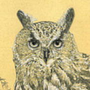 Owl Study Art Print