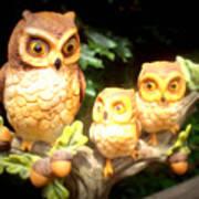 Owl Trio Art Print