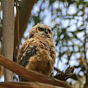 Owlet Lookout Art Print
