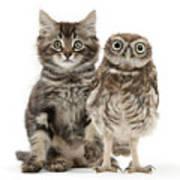 Owling And Yowling Art Print