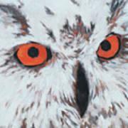 Owlish Eyes Art Print