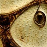 Owl's Eye Art Print