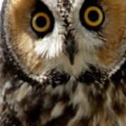 Owl's Eyes Art Print