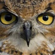 Owls Eyes Art Print