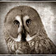 Owls Eyes -vintage Series Art Print