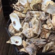 Oyster Shells Art Print