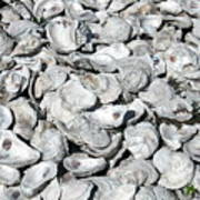 Oyster Shells On Cumberland Island Art Print