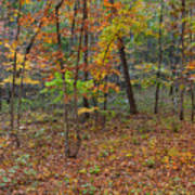 Ozark Forest In Fall 1 Art Print