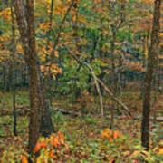 Ozark Forest In Fall 2 Art Print