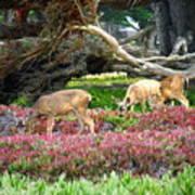 Pacific Grove Deer Feeding Art Print