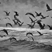 Pacific Gulls Art Print