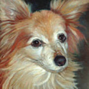 Paco The Papillion Art Print