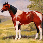 Paint Horse Gelding Portrait Oil Painting - Gizmo Art Print