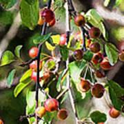 Painted Berries Art Print