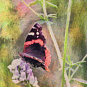 Painted Butterfly Art Print
