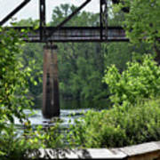Painted Congaree Four Art Print