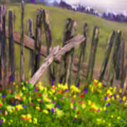Painted Fence Art Print