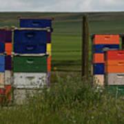 Painted Hives Art Print