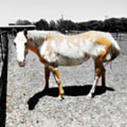 Painted Horse II Art Print