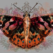 Painted Lady II Art Print
