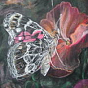 Painted Lady On A Pansy Art Print