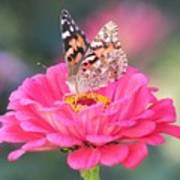 Painted Lady On Red Zinnia 3  Art Print