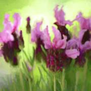 Painted Lavender By Kaye Menner Art Print